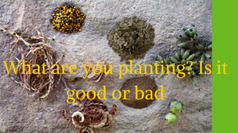 what are you planting- Is it good or bad