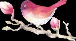 watercolour-magnolia-12