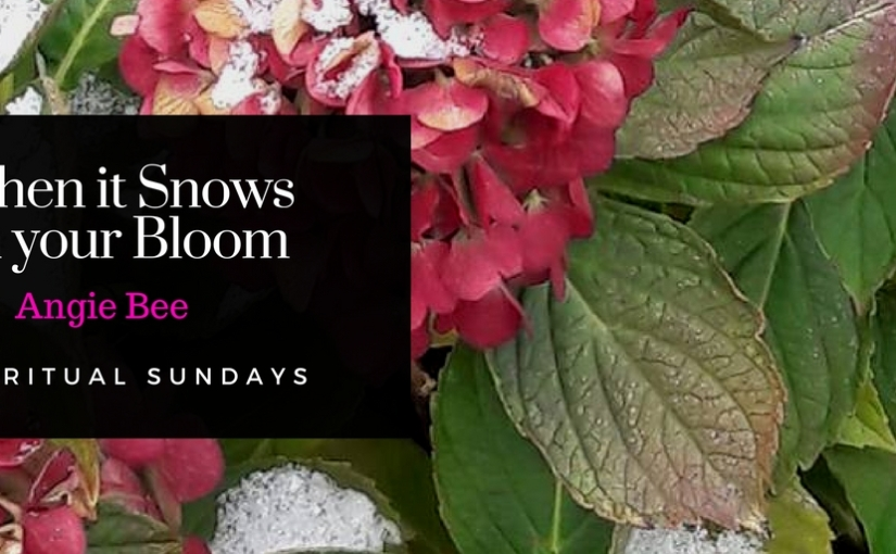 #SpiritualSundays….When it Snows on your Bloom: Guest Blogger Angie Bee